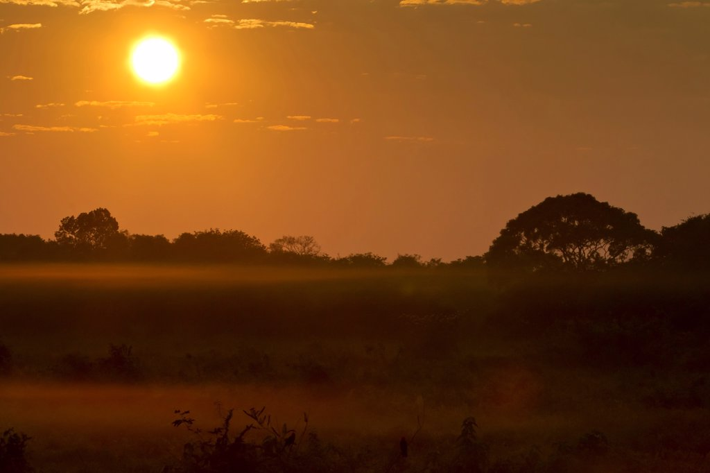 Stock Photo: 4421-33271 Sunrise over misty landscape, Pantanal, Mato Grosso, Brazil