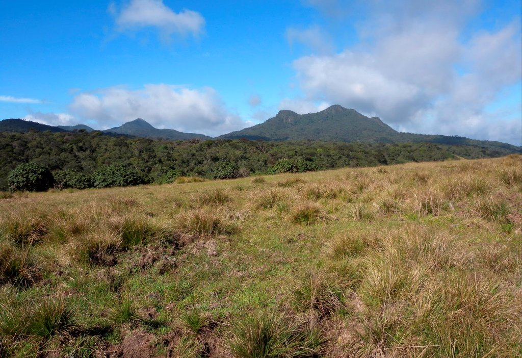 Stock Photo: 4421-33475 View over upland grassland and forest towards mountains, Horton Plains N.P., Sri Lanka, december