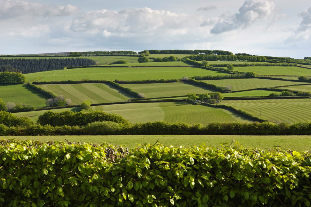 Stock Photo: 4421-33697 View of meadows and pasture with hedgerows, Wheddon Cross, Exmoor N.P., Somerset, England, may