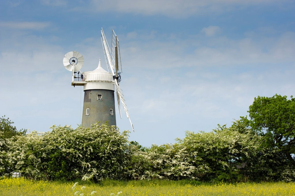 Windmill and hedgerow, Great Bircham Windmill, Great Bircham, Norfolk, England, may : Stock Photo