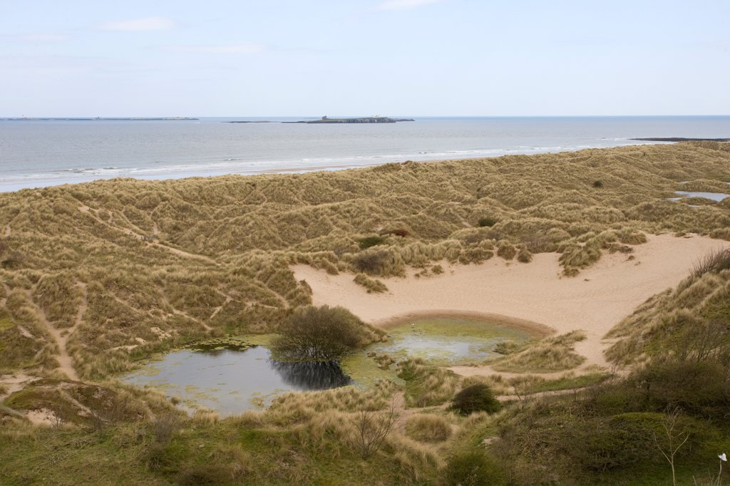 Stock Photo: 4421-33741 View of coastal sand dune slacks with pool, Northumberland, England, april