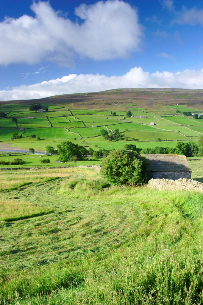 Cut grass in meadow and stone barn near river, drystone walls on hillside, River Swale, Reeth, Swaledale, Yorkshire Dales N.P., North Yorkshire, England, august : Stock Photo