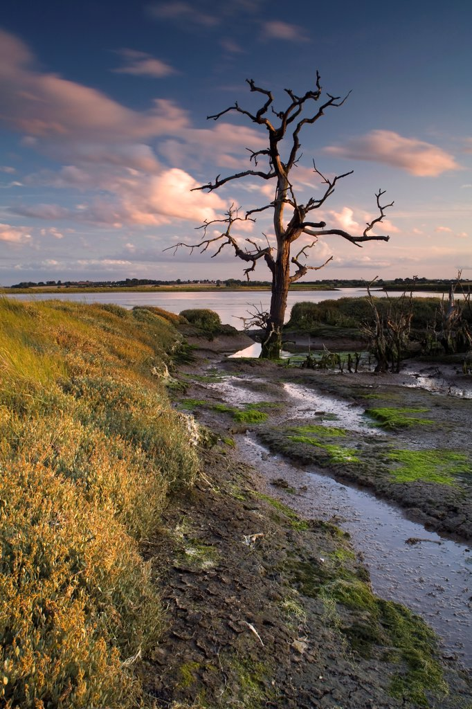 Stock Photo: 4421-34192 View of wetland habitat at sunset, created to mitigate against loss of Fagbury mudflats as result of expansion of Port of Felixstowe, Trimley Marshes Reserve, River Orwell, Suffolk, England, july
