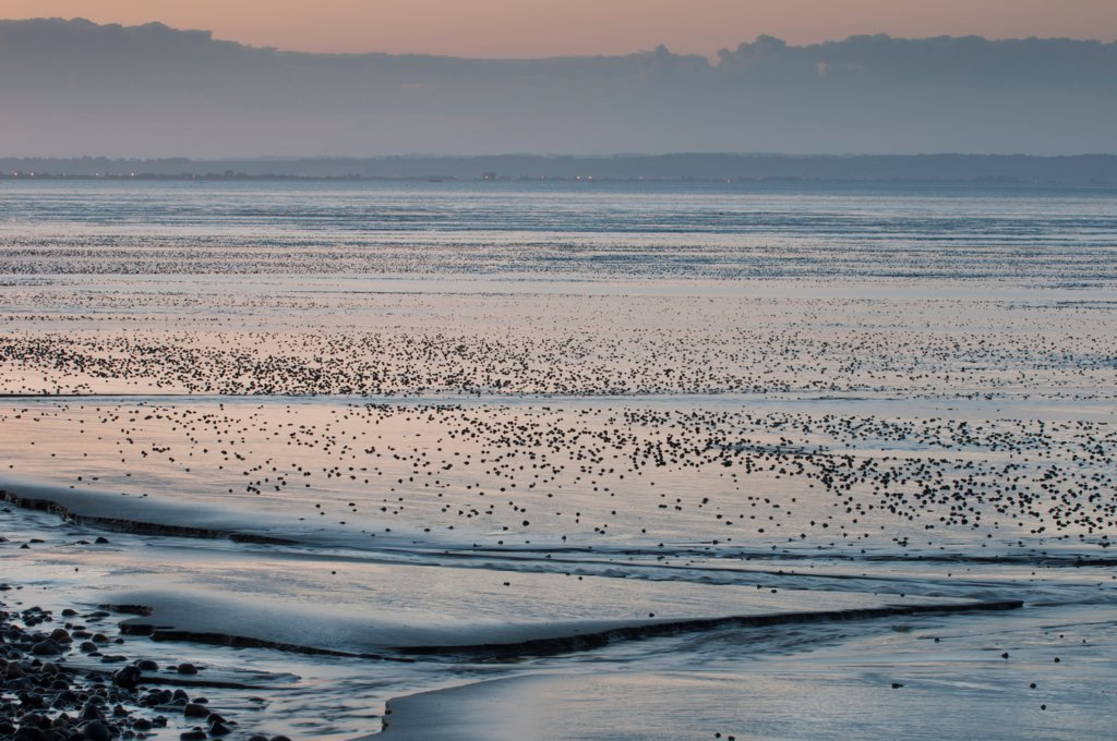 View of coastal mudflats with channels at sunset, Dungeness, Kent, England, june : Stock Photo