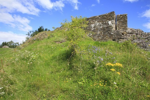 Stock Photo: 4421-35090 Wildflowers growing on slope amongst ruins of castle, Dolforwyn Castle, Powys, Wales, august