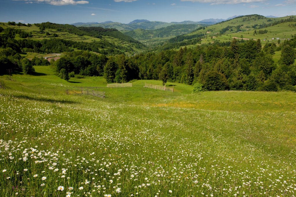 View over meadow towards mountains, Rodnii Mountains, near Nasaud, Northern Romania, june : Stock Photo