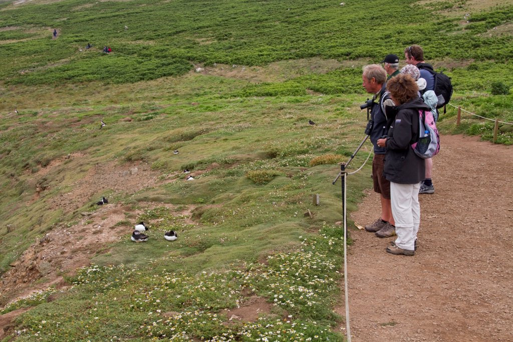 visitors on skomer island watch puffins : Stock Photo