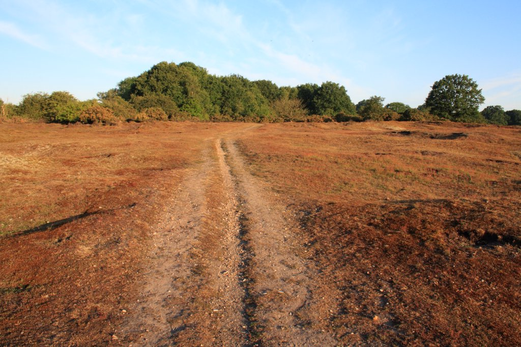 Stock Photo: 4421-39047 View of track through lowland heathland reserve habitat, Wortham Ling, Upper Waveney Valley, Suffolk, England, june