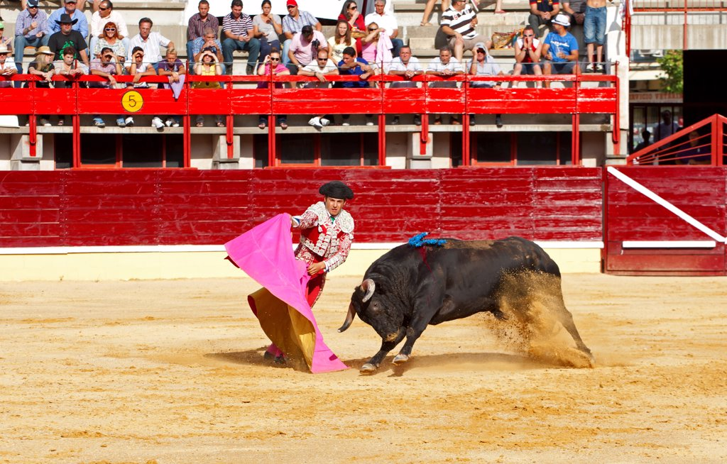 Stock Photo: 4421-39304 Bullfighting, Matador with cape, fighting bull impaled with banderillas in bullring, Medina del Campo, Valladolid, Castile-Leon, Northern Spain, september