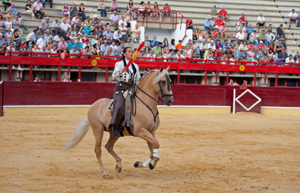 Stock Photo: 4421-39307 Bullfighting, Banderillero with banderillas, on horseback in bullring, Corrida de rejones, Medina del Campo, Valladolid, Castile-Leon, Northern Spain, september
