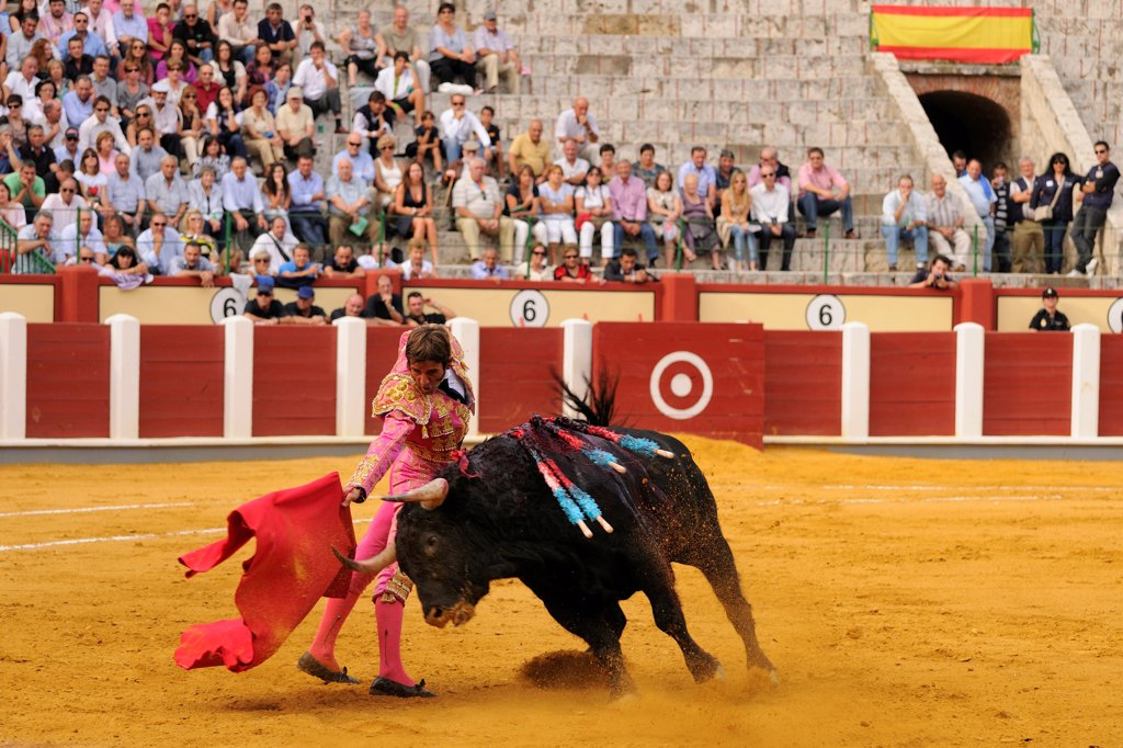 Bullfighting, Matador with muleta, fighting bull impaled with banderillas in bullring, 'Tercio de muerte' stage of bullfight, Spain, september : Stock Photo