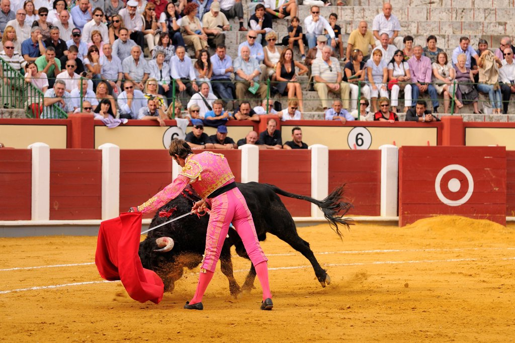 Bullfighting, Matador with muleta and sword, fighting bull impaled with banderillas in bullring, 'Tercio de muerte' stage of bullfight, Spain, september : Stock Photo
