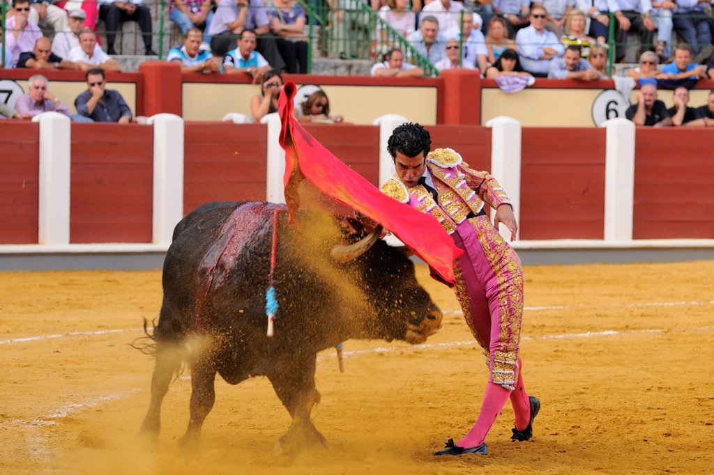 Stock Photo: 4421-39314 Bullfighting, Matador with muleta, fighting bull impaled with banderillas in bullring, 'Tercio de muerte' stage of bullfight, Spain, september