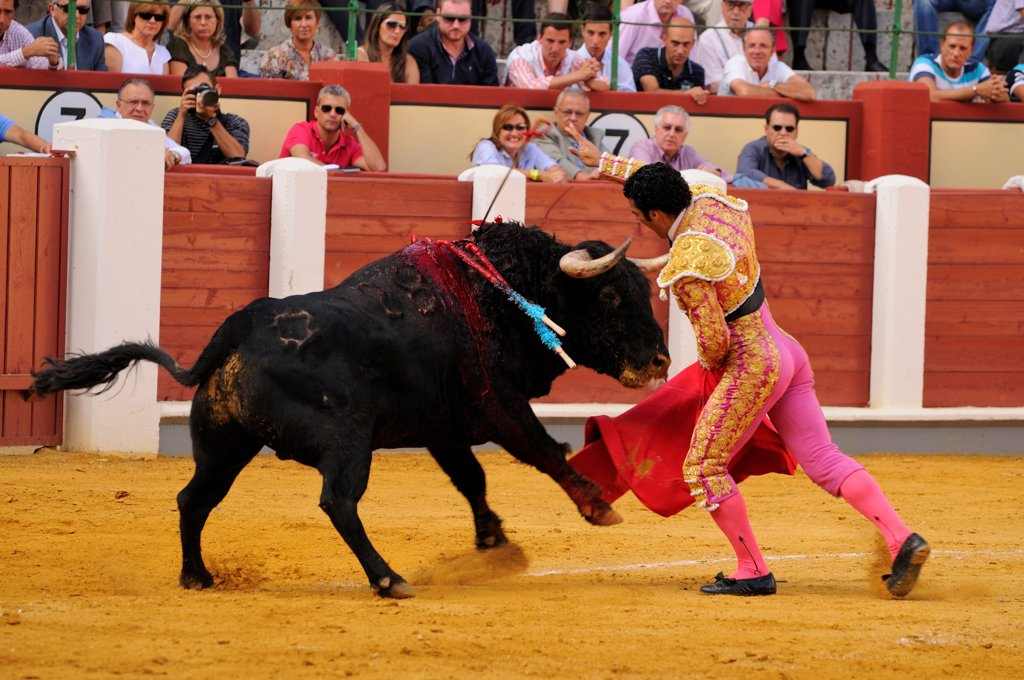 Stock Photo: 4421-39316 Bullfighting, Matador with muleta and sword, fighting bull impaled with banderillas in bullring, 'Tercio de muerte' stage of bullfight, Spain, september