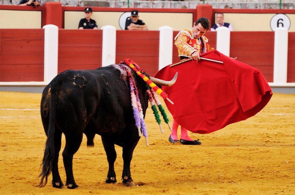 Stock Photo: 4421-39321 Bullfighting, Matador with muleta and sword, fighting bull impaled with banderillas in bullring, 'Tercio de muerte' stage of bullfight, Spain, september