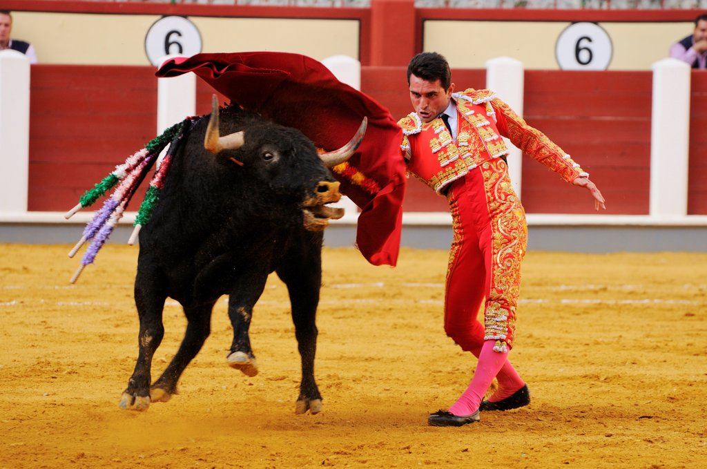 Stock Photo: 4421-39322 Bullfighting, Matador with muleta, fighting bull impaled with banderillas in bullring, 'Tercio de muerte' stage of bullfight, Spain, september
