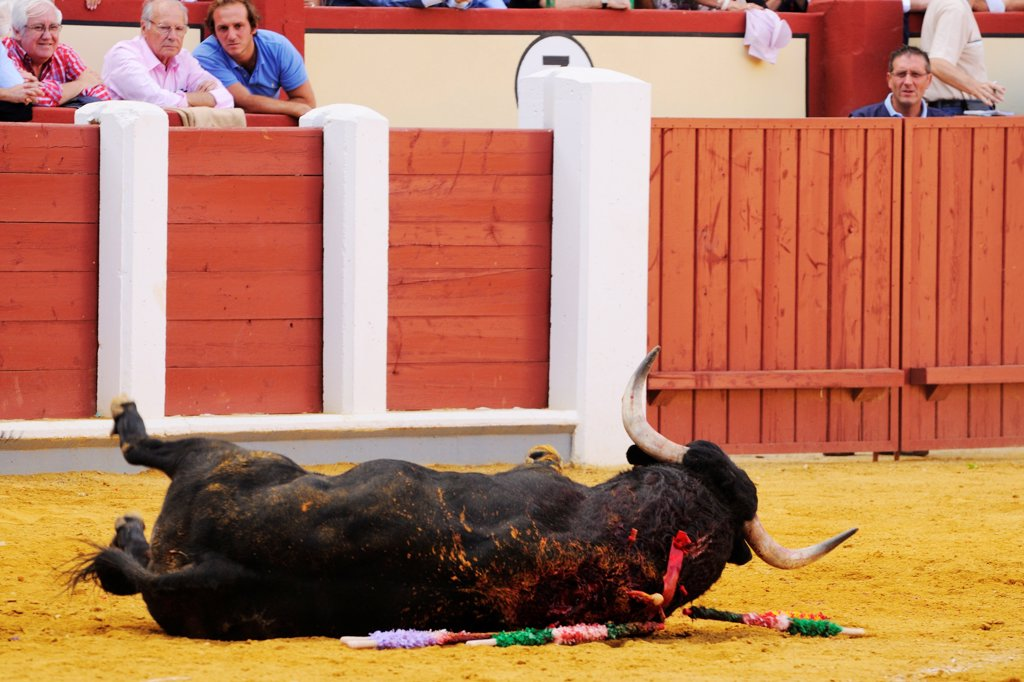 Stock Photo: 4421-39324 Bullfighting, bull dying after being impaled with sword in bullring, 'Tercio de muerte' stage of bullfight, Spain, september