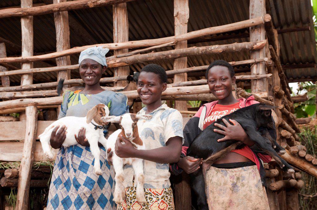 Stock Photo: 4421-40036 Goat farming, three women holding young Boer goats beside shed, Rwanda