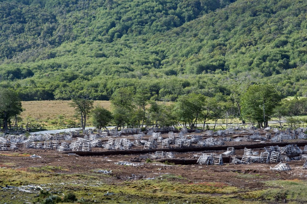 Peat extraction, at edge of Southern Beech (Nothofagus sp.) forest, Valle de Andorra Turbera, Tierra del Fuego, Southern Patagonia, Argentina : Stock Photo