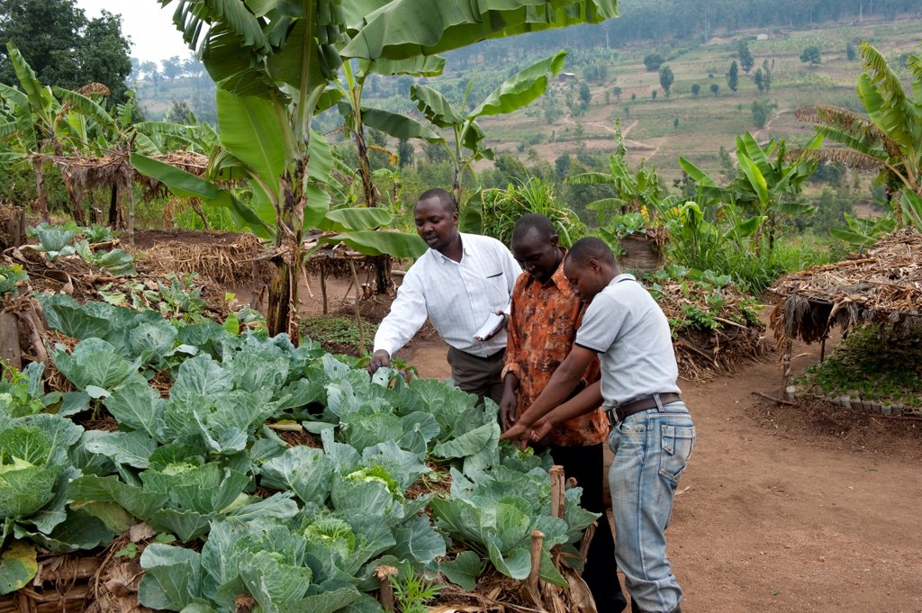 Stock Photo: 4421-40501 Farmer and local advisors standing at keyhole garden, with compost pile in middle to allow good vegetable growth, Rwanda