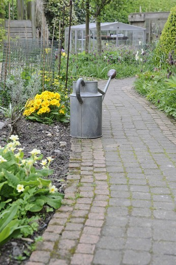 Garden path and watering can, flowerbeds with primulas and snake's head fritillaries, Norfolk, England, april : Stock Photo