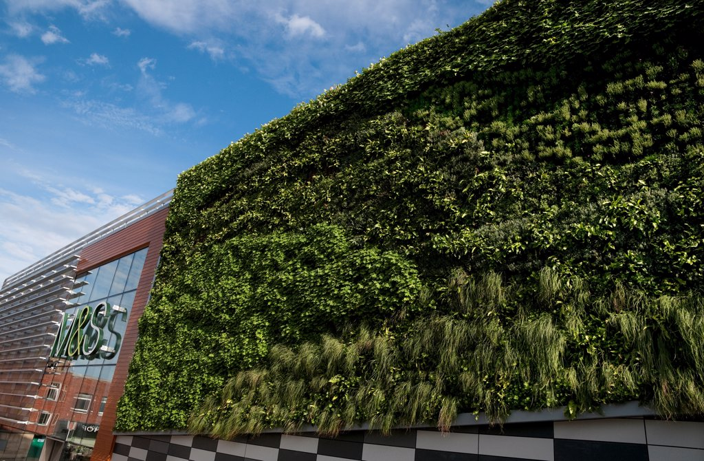 'Living Wall System' (Green Wall) growing on wall of M&S store in city, Norwich, Norfolk, England, september : Stock Photo