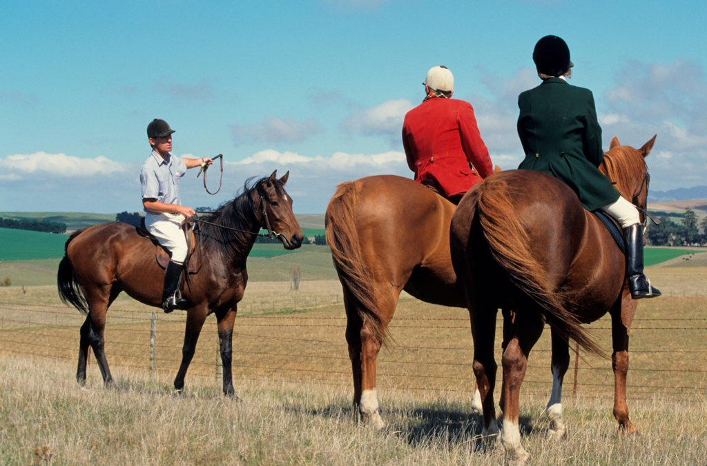 Stock Photo: 4421-40997 Master of Hunt and wife with local landowner, waiting on horseback during harrier hunt, hunting for hares or foxes (introduced species), Starborough Hunt, New Zealand