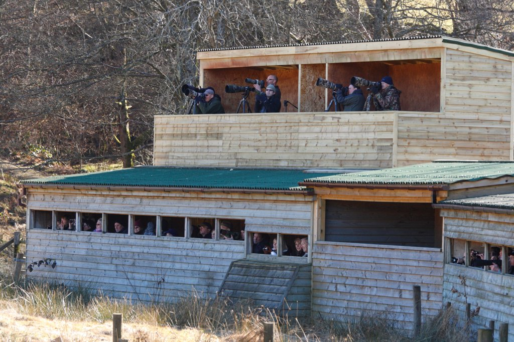 Bird photographers and birdwatchers in hides, viewing Red Kite (Milvus milvus) at feeding station, Gigrin Farm, Powys, Wales, april : Stock Photo