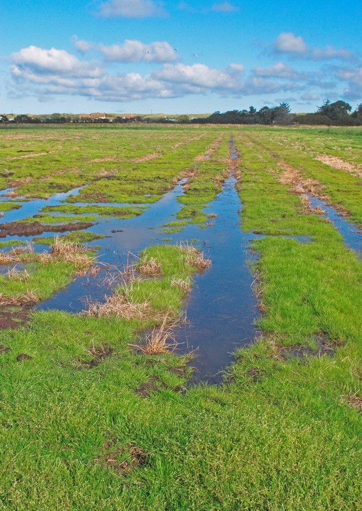 Stock Photo: 4421-42725 View across newly created 'Higher Level Stewardship' scheme land on former arable field, with flooding due to deliberate rise in water table, Norfolk, England, October