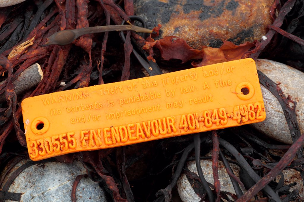 American lobster trap tag washed up on beach strandline, Chesil Beach, Dorset, England, October : Stock Photo