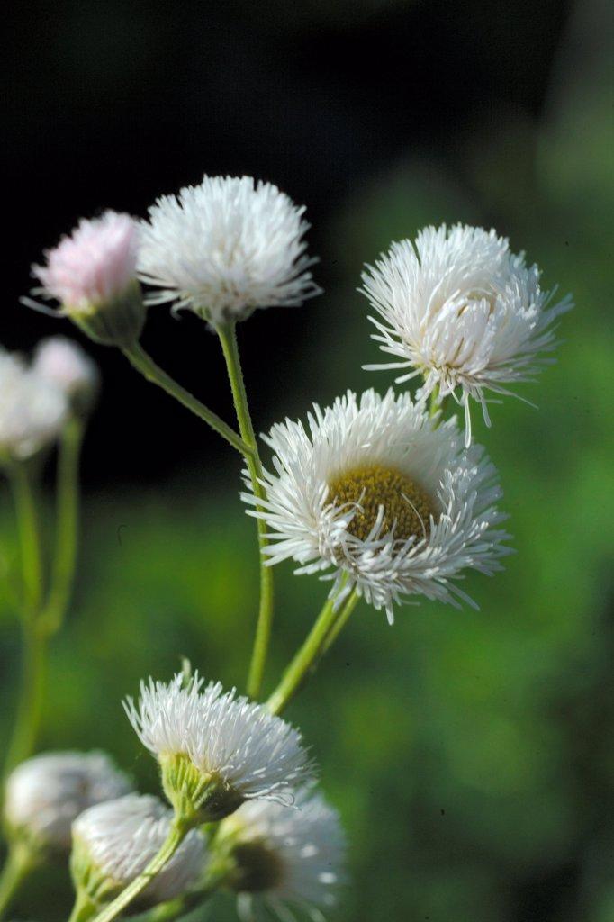 Flower Festival : Stock Photo