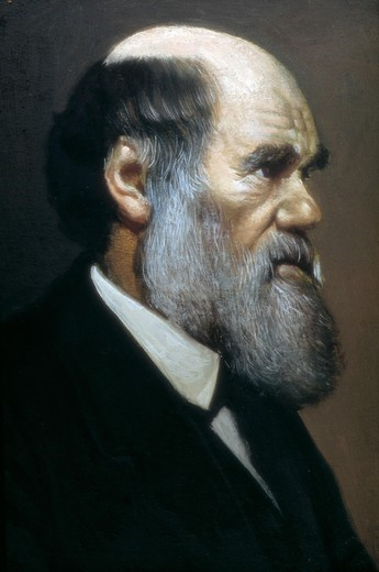 Stock Photo: 4435-12053 DARWIN, Charles Robert (1809-1882). British naturalist, author of the theory of evolution by natural selection. Painting.