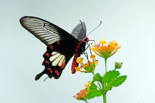 Stock Photo: 4445R-8807 Butterfly and flower