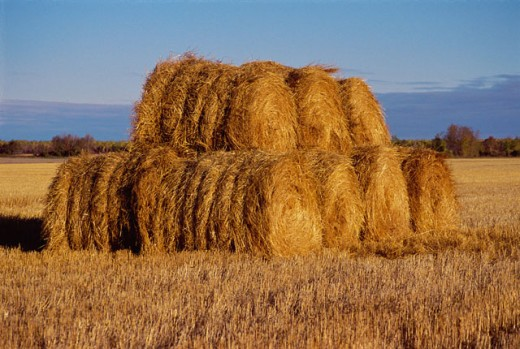 Stock Photo: 447-198 Bales of hay in a field, Manitoba, Canada