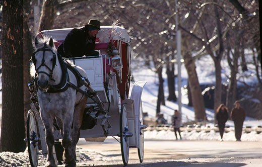 USA,  New York City,  Central Park : Stock Photo