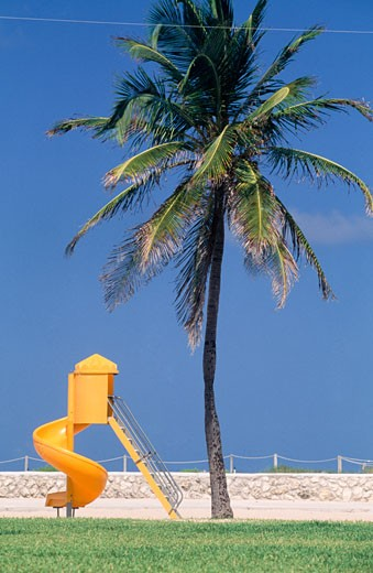 Playground slide and palm tree,  USA,  Florida,  Miami : Stock Photo