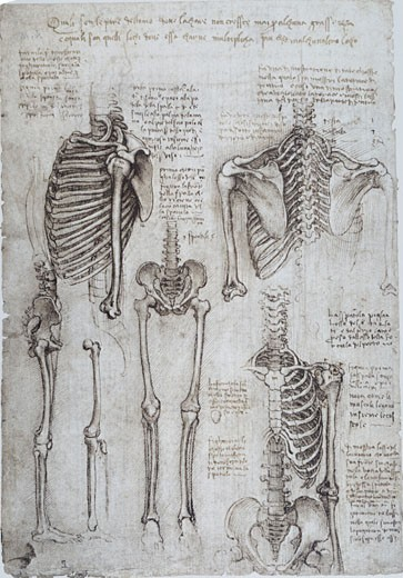 Stock Photo: 463-6326 Anatomy Studies: The Human Skeleton/Shoulder, Thorax, Pelvis, And Legs