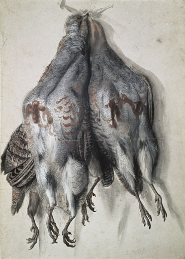 Bundle With Four Dead Partridges Circa 1532 Lucas Cranach the Elder (1472-1553 German) Watercolor Staatliches Kunstsammlungen, (Kupferstichkabinett)Dresden, Germany : Stock Photo