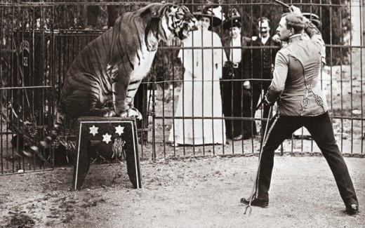 Stock Photo: 463-7287 Animal tamer with a tiger performing in a circus, c. 1910