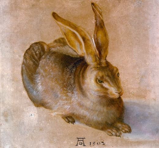 Stock Photo: 463-7323 Young Field Hare,  by Albrecht Durer,  Germany,  (Kupferstichkabinett) Dresden,  Staatliches Kunstsammlungen,  16th century