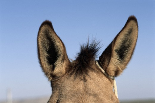 Mule Ears : Stock Photo
