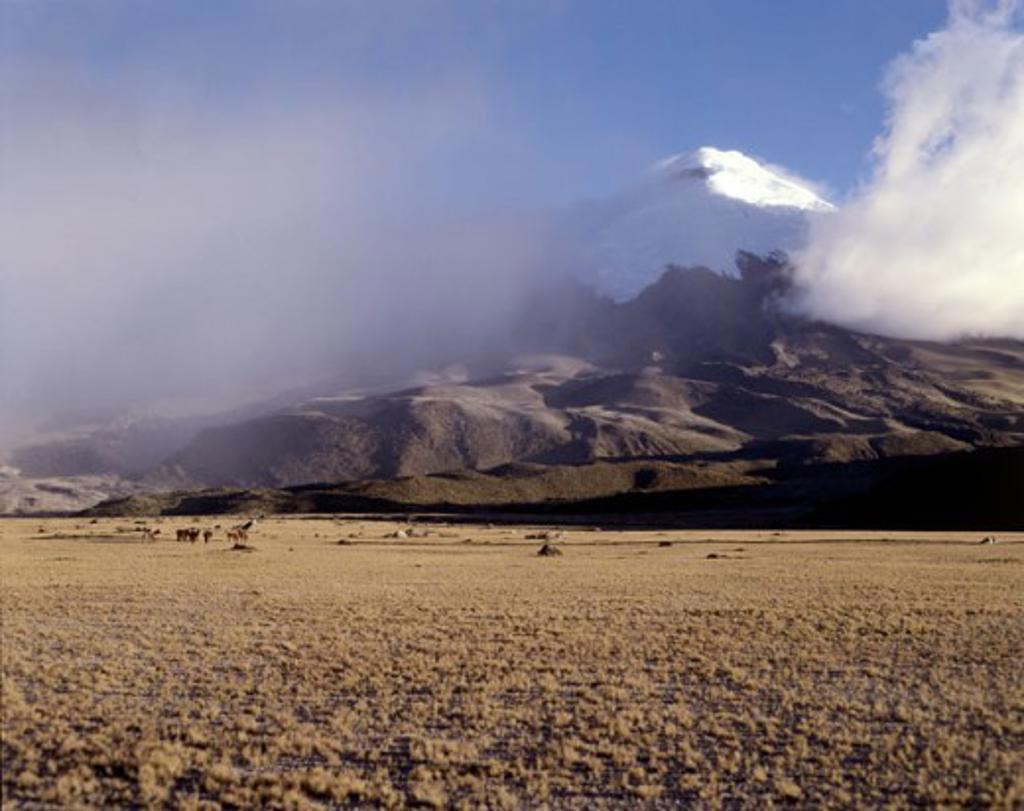 Cotopaxi Peak Andes Mountains Ecuador : Stock Photo