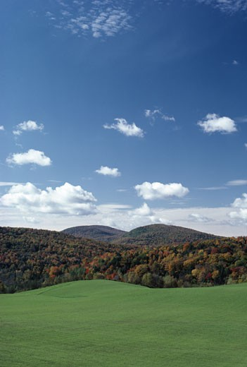 Stock Photo: 47-1602A Trees on a landscape, Connecticut, USA