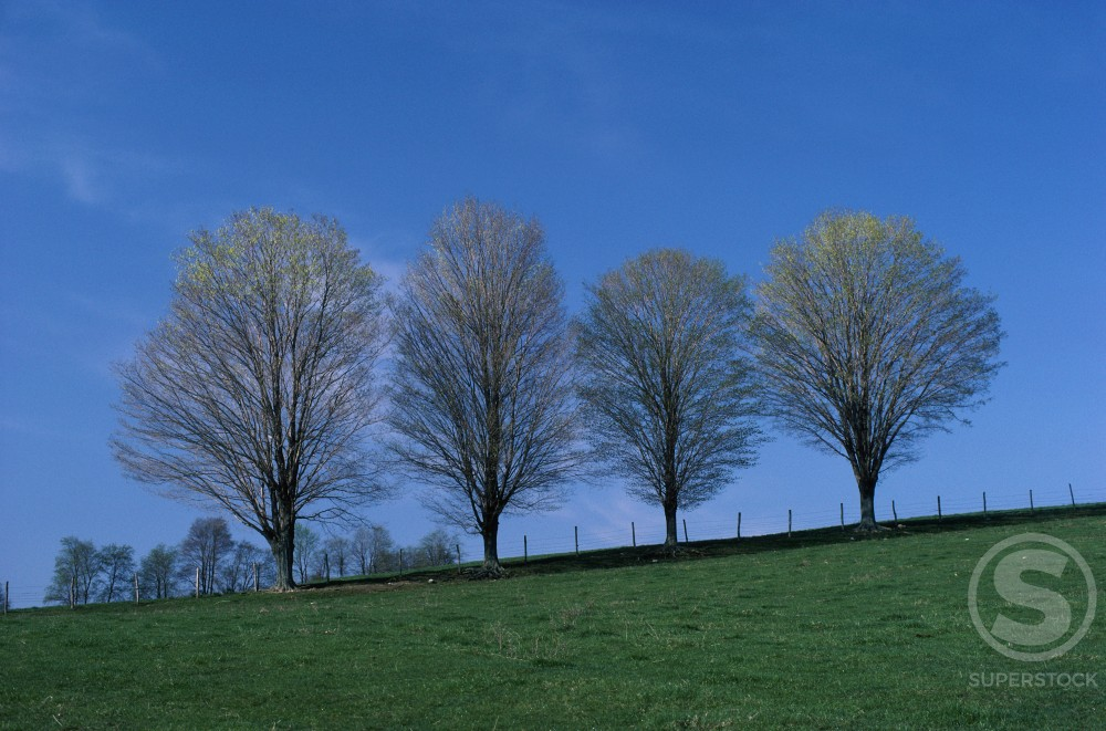 Stock Photo: 47-1894A Trees on a hill during Spring