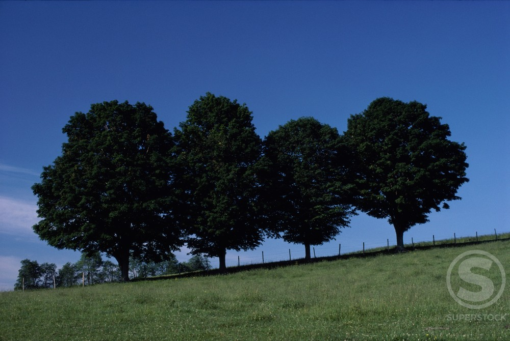 Stock Photo: 47-1894B Trees on a hill during Summer