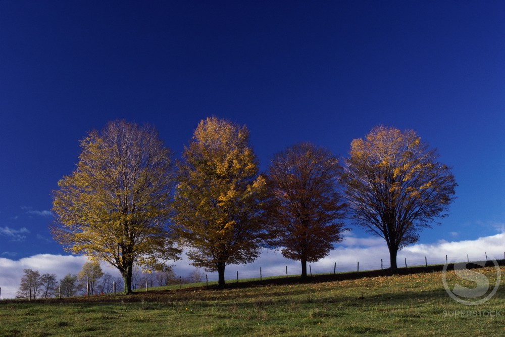 Stock Photo: 47-1894C Trees on a hill during Autumn