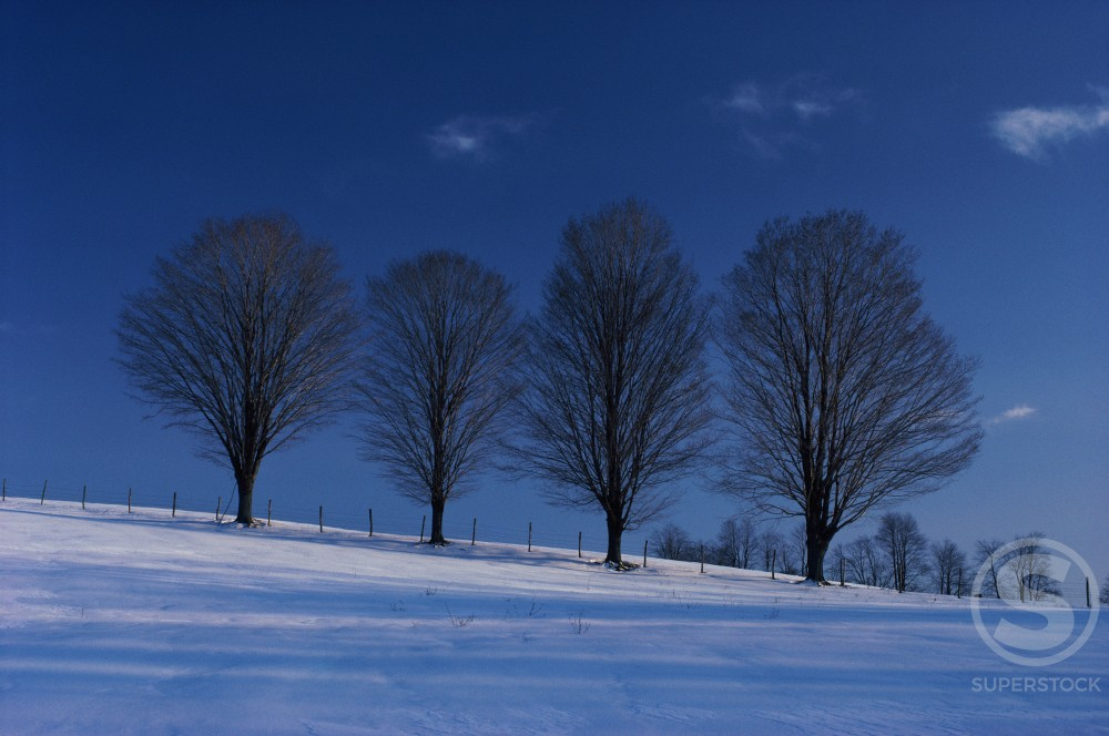 Trees on a hill during Winter : Stock Photo