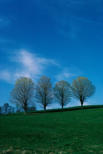 Stock Photo: 47-1895A Trees on a hill during Spring
