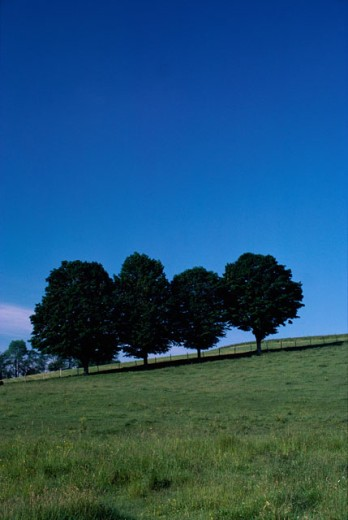 Stock Photo: 47-1895B Trees on a hill during Summer