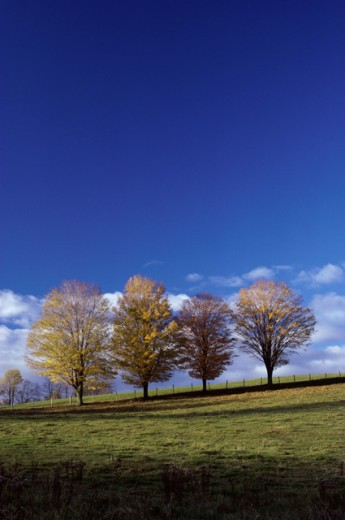 Stock Photo: 47-1895C Trees on a hill during Autumn